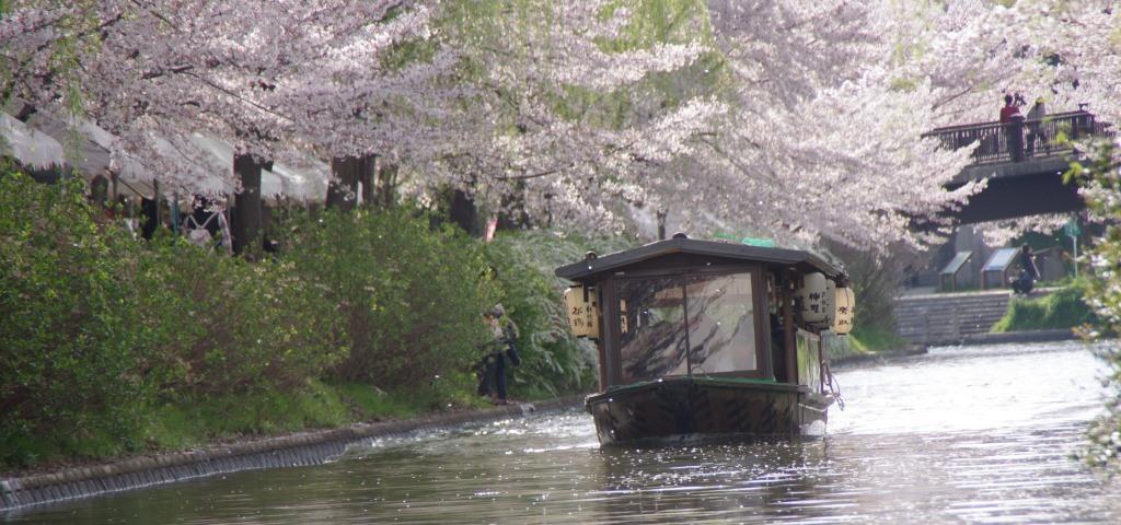 Kyoto Fushimi – Beautiful cherry blossom along the canal