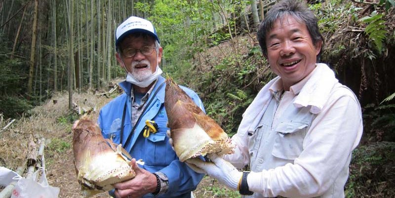 Experience harvesting bamboo shoots and enjoy cooking and tasting this local delicacy in Oyamazaki town in Kyoto.